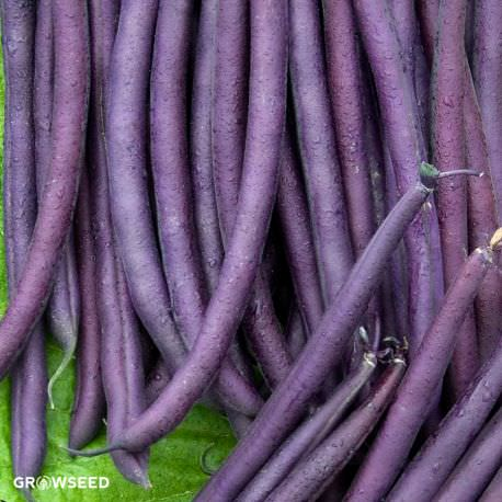 Amethyst French Bean Seeds