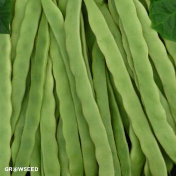 Hunter French Bean Seeds