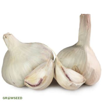 Vallelado Garlic Bulbs