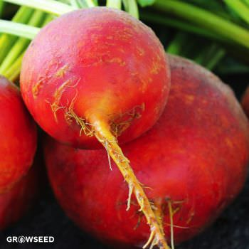 Golden Beetroot Seeds
