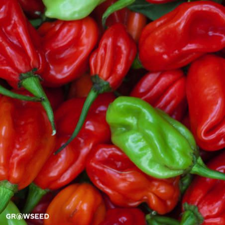 how to grow habanero from seed