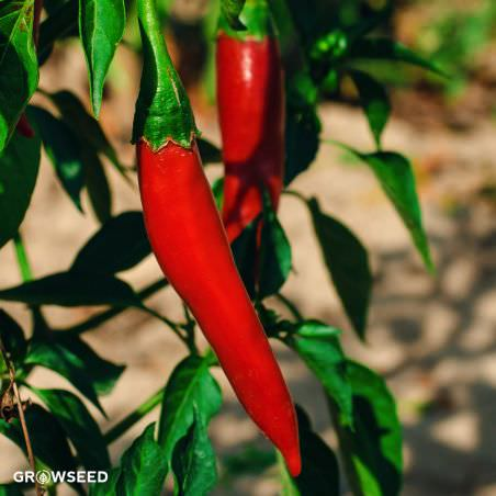Cayenne Long Slim Pepper Seeds