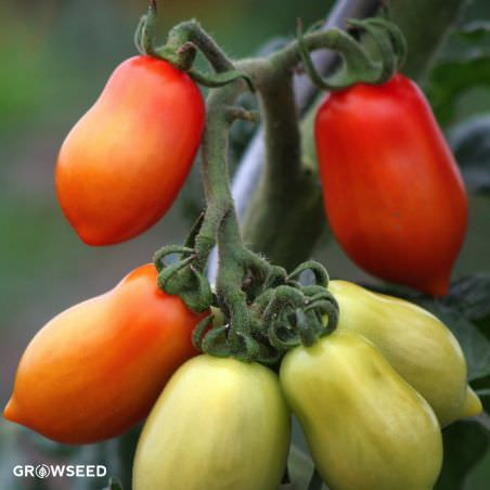 San Marzano Red Plum Tomato Seeds