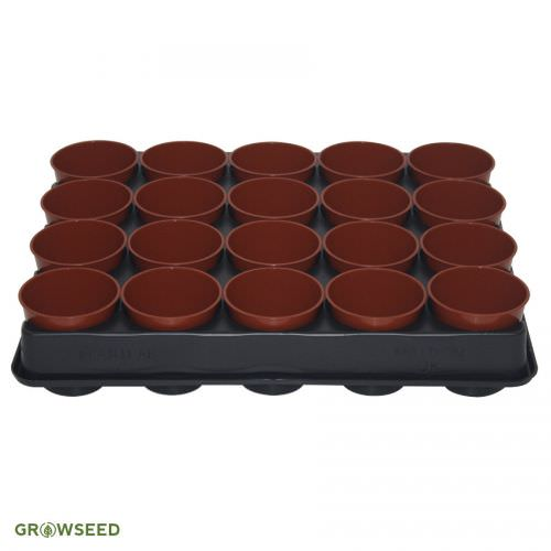 6cm Round Pots & Carry Tray