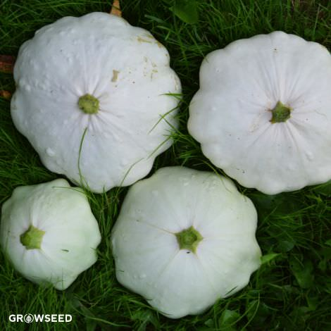 Custard White Patty Pan Courgette Seeds
