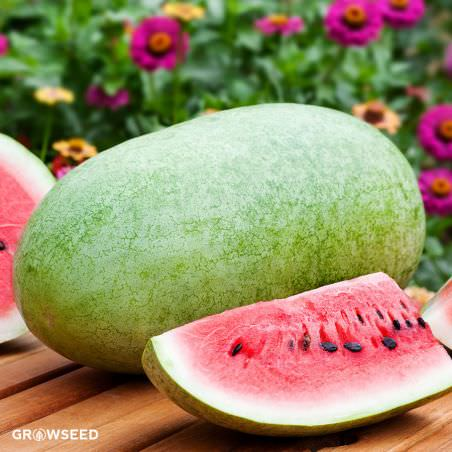 Charleston Gray Watermelon Seeds
