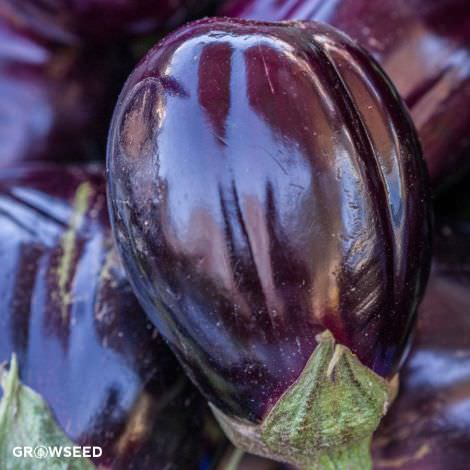Black Beauty Organic Aubergine Seeds