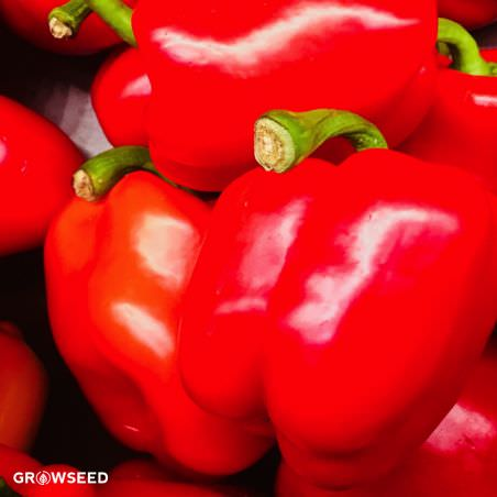Californian Wonder Organic Sweet Pepper Seeds