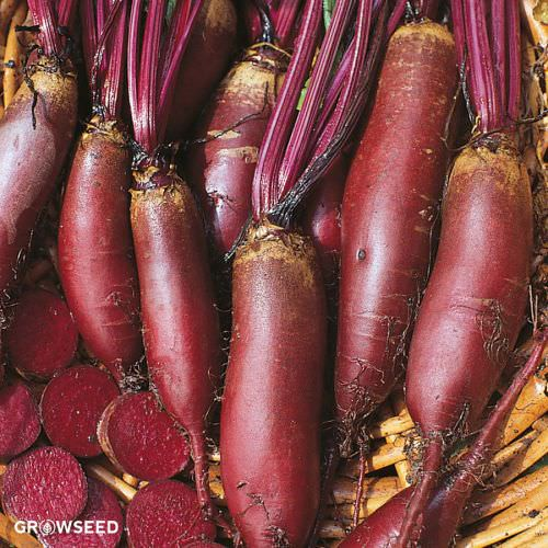Cylindra Beetroot Seeds