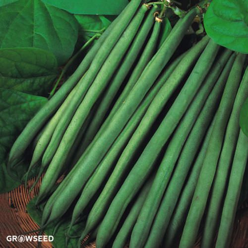 Sprite French Bean Seeds