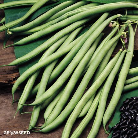 Cobra French Bean Seeds
