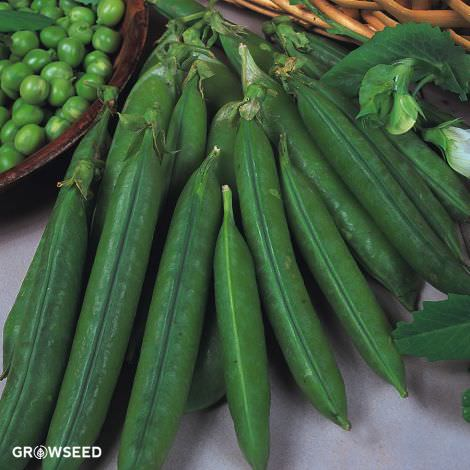 Douce Provence Pea Seeds