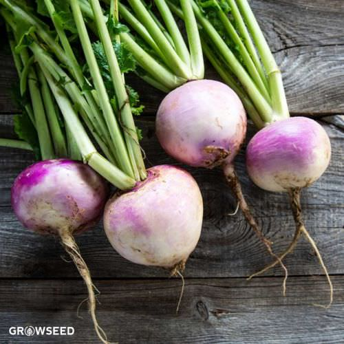 Sweetbell F1 Turnip Seeds