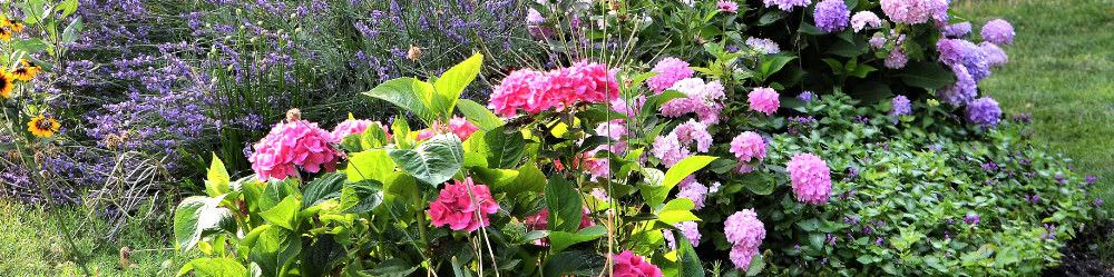 Seeds to sow and grow in July