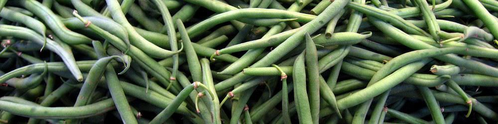 Growing French Bean Seeds