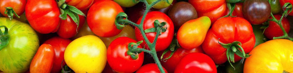 The best tasting tomato seed, grow tomatoes from seed.